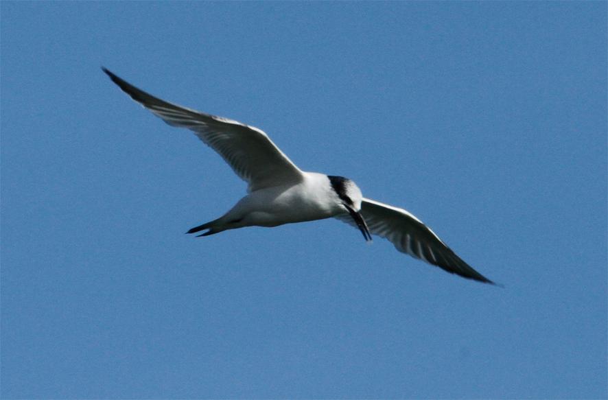 salvar aves marinas